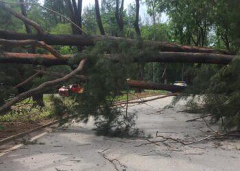 Pohon tumbang di jalan RE Martadinatang, Sekupang, Batam. (Foto: Muhamad Ishlahuddin)